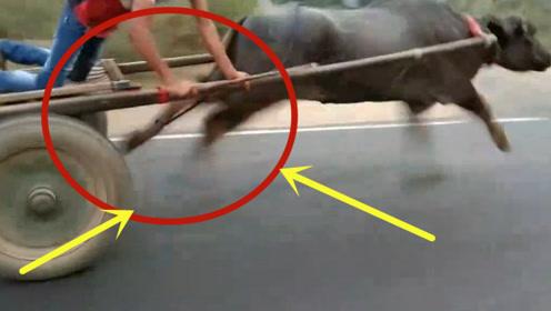 """真绝了!农村小伙驾驶""""兰博基牛"""",在道路上疯狂的飙车!"""