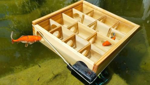 鱼的记忆只有7秒吗?小哥让金鱼走迷宫,结果发现它们聪明着呢