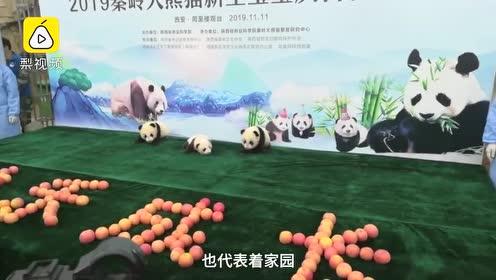"""揭晓了!陕西3只大熊猫宝宝取名""""秦佳园"""",近3万人取2200个名字"""