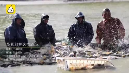 职业捕鱼人每天泡水中:水花似冰砸脸,1斤赚8分