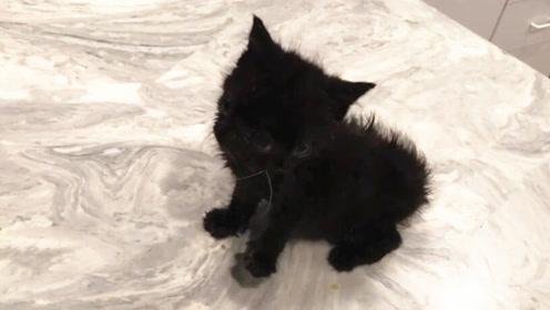 美国兽医发现一只有四只眼睛、两张嘴和两只鼻子的小猫