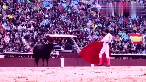这才是真正的斗牛表演,斗牛士把红布过公牛的背那一刻,太漂亮了