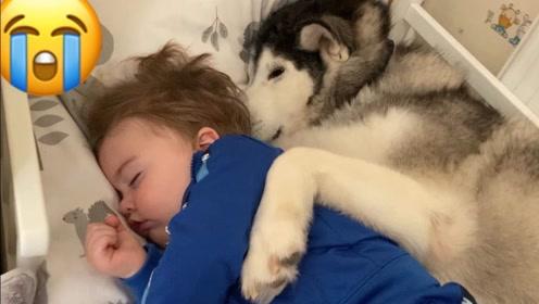 为什么人们会把孩子交给狗狗照看,真不担心吗?看完总算明白了