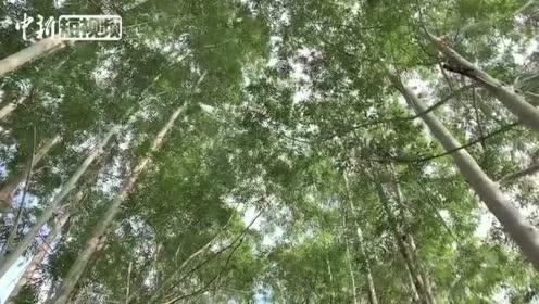 邕江岸椰树成群11月的南宁美如春