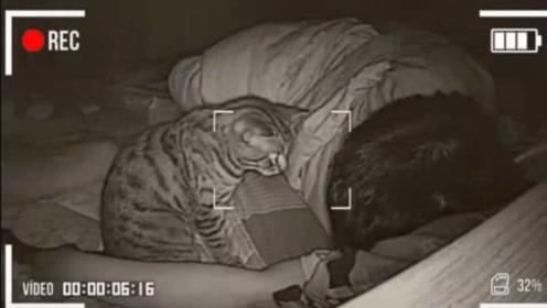 主人长期和猫一起睡,有天突然查看监控,发现了诡异的画面