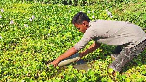 印度小伙用塑料管制作捕鱼神器,随即埋入杂草下,下一幕收获杠杠的