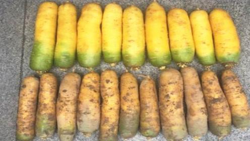 买胡萝卜,带土的好还是不带土的好?老菜农透露其中猫腻