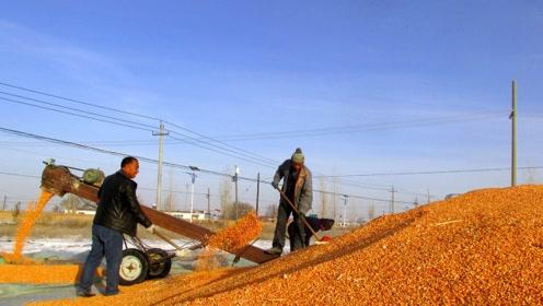 还未大量上市,东北玉米就跌价,啥时候卖粮合适,能不能涨上去?
