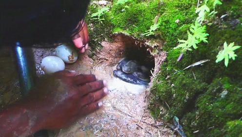 浑浊的野溪小洞,大叔朝洞内打个鸡蛋下去,结果神奇一幕出现了