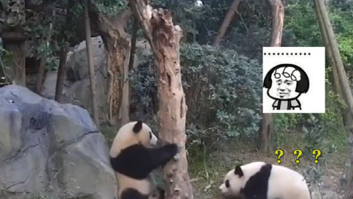 熊猫又㕛叒坑队友,一副无辜脸:你别生气嘛,我不是故意的啦!