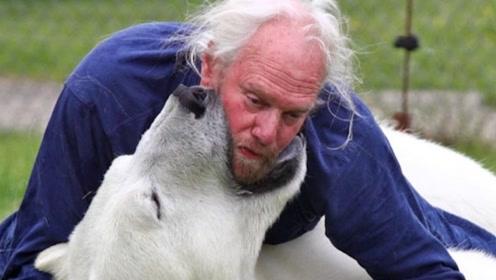 老人好心收养北极熊,16年长到700斤,长大后竟这样对老人