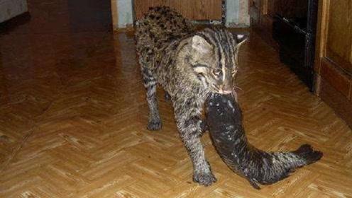 女子捡回一只猫,长大后常往家中抓鱼,跟踪之后发现不得了!