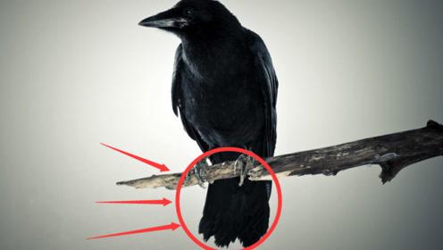 """看到""""乌鸦""""是真的不吉利吗?是迷信还是科学?看看专家怎么说"""