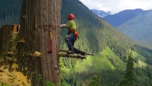 老外实拍惊心动魄的高空伐木工作,工人仅凭一己之力砍断,看得恐高症都犯了