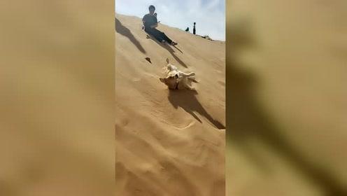 偶遇一只超级会玩的狗狗,玩的无忧无虑好嗨呀!
