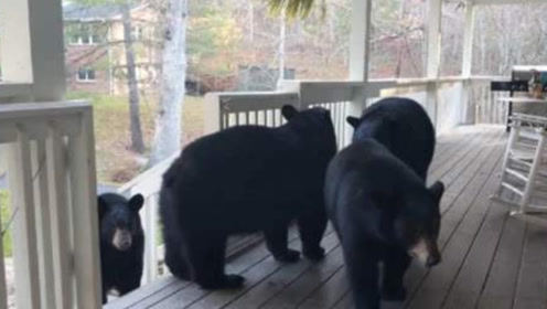 主人正在阳台休息,突然闯进4头黑熊,这谁顶得住啊