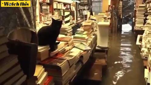 """意大利威尼斯连遭暴雨袭击 最美书店""""沉船书店""""也被淹"""