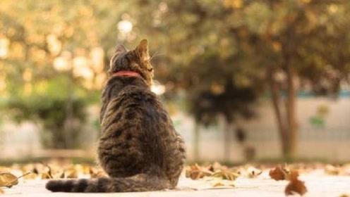 为什么猫咪临终前,会选择独自离开家?答案让人潸然泪下