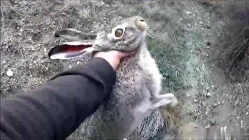 男子到山上猎野兔,一出手就打到只大的