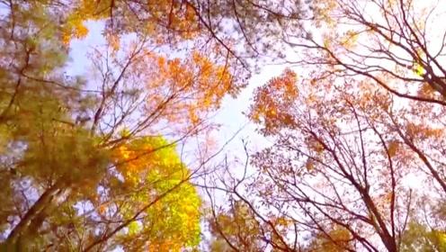 美极了!剑门关彩林上线!走蜀道过剑门 带你体验彩林之旅