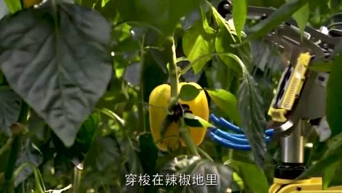 外国人发明了机器人摘辣椒,摘完之后,主人乐了