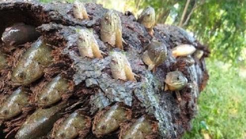 农村小伙在水中捞出棵腐烂的棕榈树,结果发现惊喜,小伙乐不可支