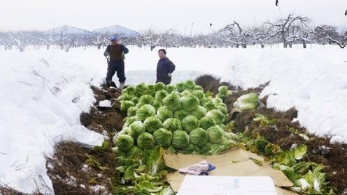 日本高原雪地农场,上面是雪,下面全是新鲜的蔬菜!