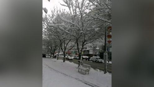今天新疆的早上和广州的下午,两个花的世界