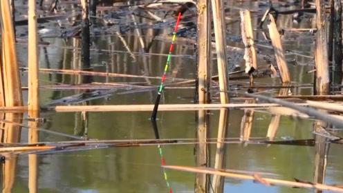 钓鱼:资源太好了,让人很羡慕