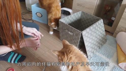 家里新添了小猫咪总是会容易夭折?几个方法告诉你!