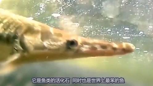 巴西亚马逊河发现上亿年前古生鱼,1条可买上万元,快被吃灭绝?