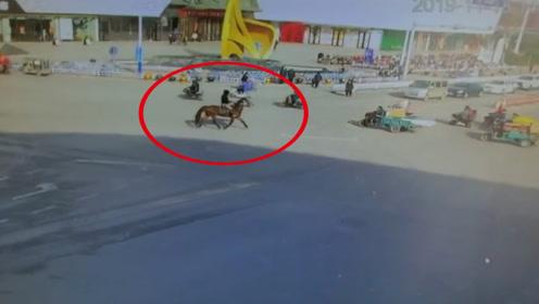 男子街头骑马狂奔追尾小车后逃逸 司机驾车追赶竟跑不过马