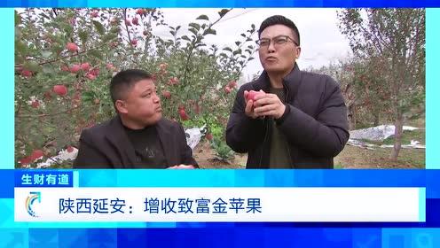 """红苹果如何变""""金""""苹果?会种、会存、会选 才能卖上好价钱 视频"""