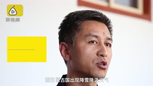 """蒙古国降雪降温,野驴""""偷渡""""进中国觅食"""