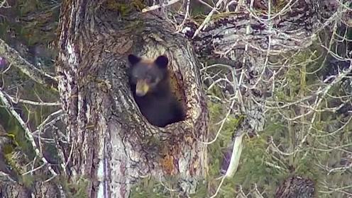 """玉米地出现一个大洞,男子以为是""""宝贝"""",走近一看里面竟然是只熊"""