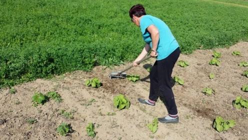 国外阿姨发明手动耕地机,一天耕耘5亩地,仅需20元就能造一把!