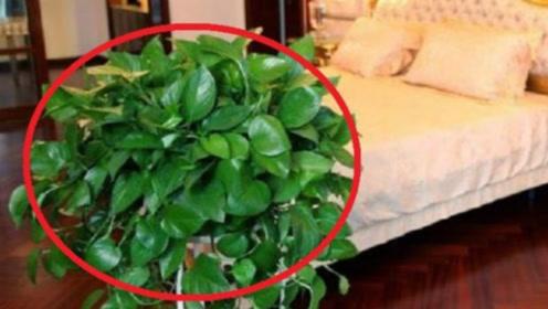 家里养植物要选哪种?这4种旺财植物,有招财进宝的寓意!
