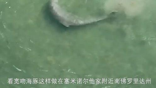 这海豚吃鱼够奇葩的,像打网球一样!鱼:我不要面子的吗?