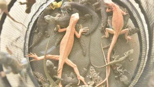 90后发烧友非法贩卖野保动物:案值1千万,都是冷血动物