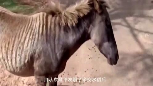 动物杂交什么样农场创造的奇葩生物,看到这匹马你别笑