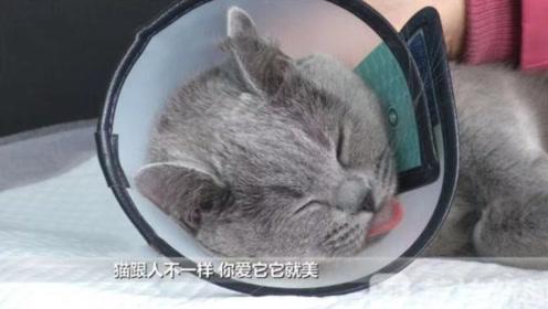 """花上万元给猫割双眼皮,术前术后""""判若两猫"""",为了猫好?"""