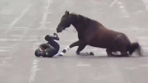 """墨西阅兵尴尬一幕:骑兵在总统眼前""""失足"""" 连人带马当场栽倒在地"""