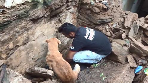 流浪狗在废墟中疯狂刨土,好心人上前帮忙,刨开的那一刻让人感动