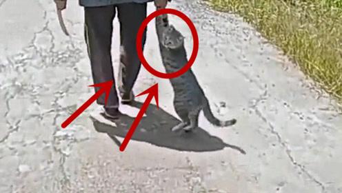 当场崩溃!霸气奶奶带猫咪散步,手机拍下小猫绝望的眼神