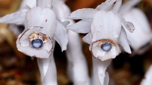 """这种植物从不进行光合作用,却照样活得很美,被称为""""死亡之花"""""""
