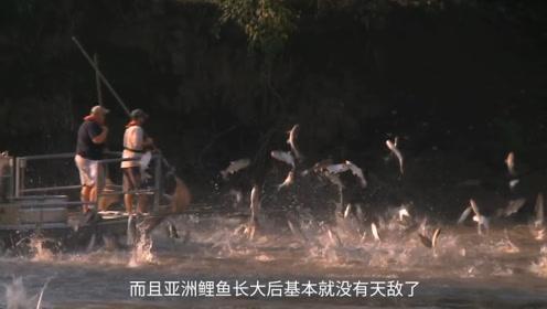 """发家致富的路?亚洲鲤鱼入侵,当地政府悬赏500万""""通缉""""!"""