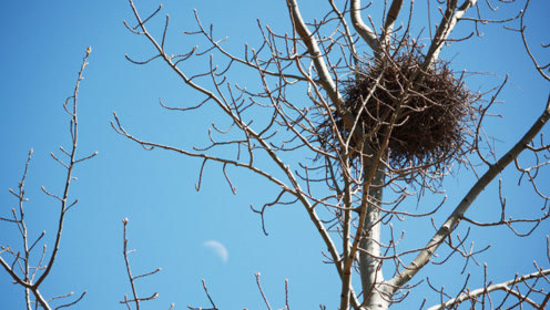 为什么鸟巢都是露天的,下大雨怎么办,多年的困惑终于解开了
