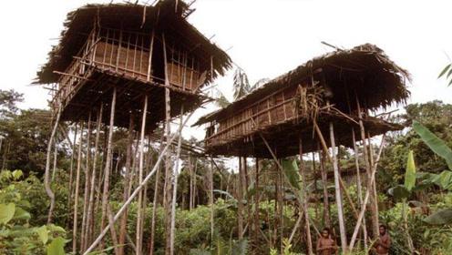 这个神秘部落,房子建在几十米的树上,回家要先爬树