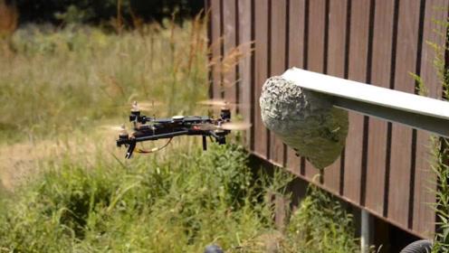 马蜂的攻击性有多强?小伙用无人机去捅蜂巢,看完实在心疼!