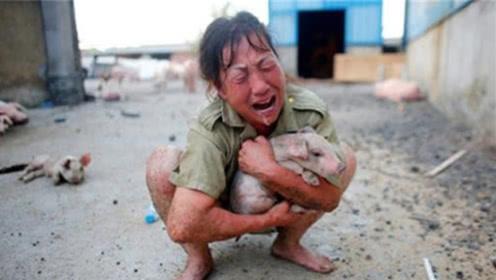 猪价持续上涨,为何有的养猪人高兴不起来?看完心里有数了